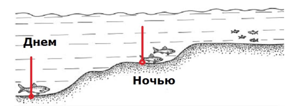Место стоянки рыбы