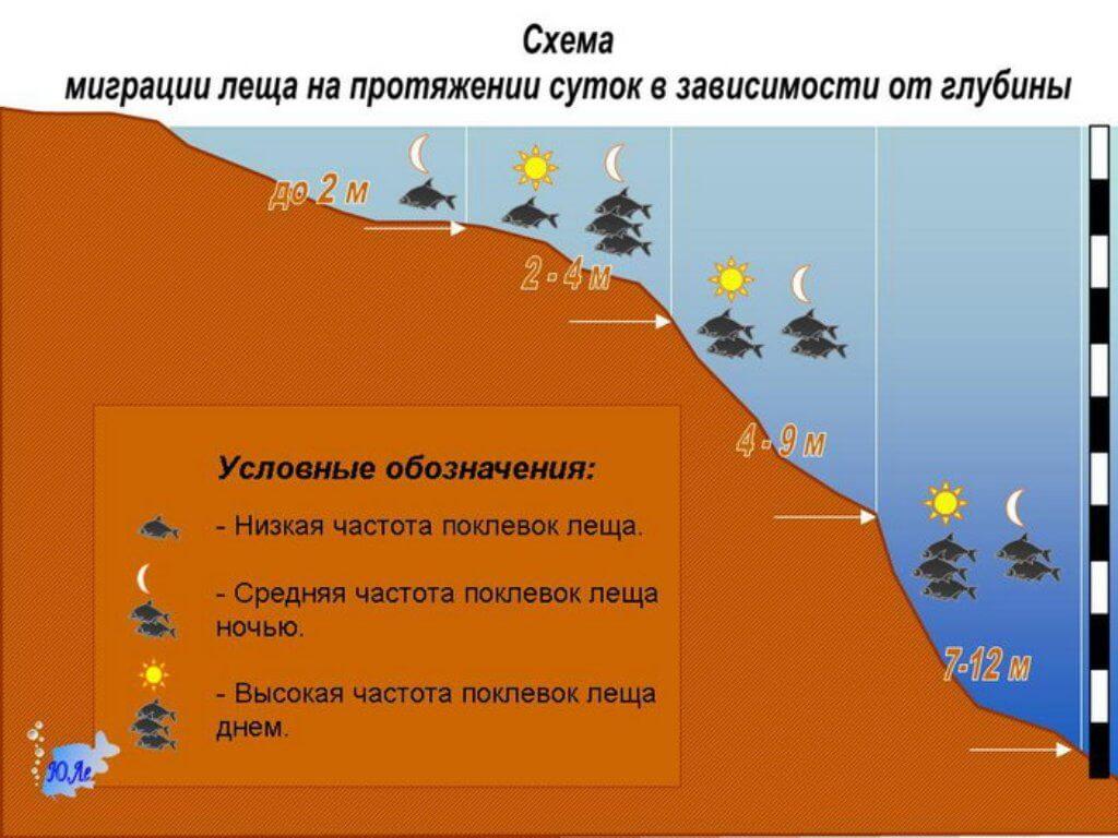 Мигрирует рыба