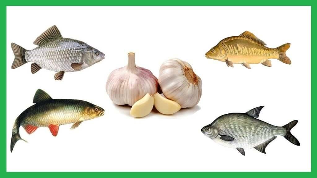 Рыба и чеснок