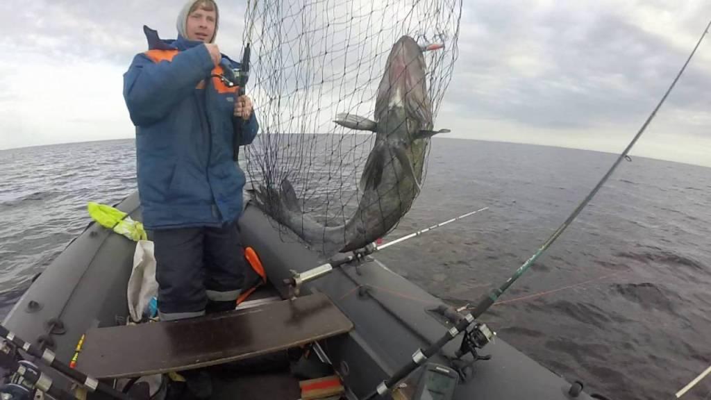 ДДобыча в садке у рыбака