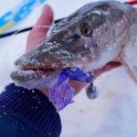 зимняя рыбалка в непогоду